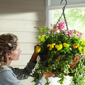 HOW TO:  Chose the right annuals for your hanging baskets