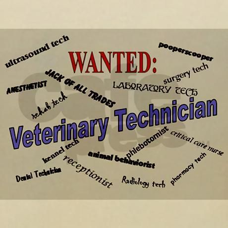 The 25+ best Vet tech quotes ideas on Pinterest Vet med, Vet - vet tech job description