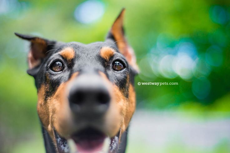 Albany, NY | Travel On-Location Pet Portrait Photography | Hannah | San Diego Pet Photography | Westway Studio | Dog Photographer | Cat Photographer | Horse Photographer | San Diego Pet Photographer