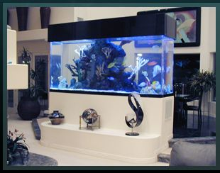 Acrylic Tank Manufacturing Of Las Vegas, Nevada | Home Of The Hit TV Show  TANKED