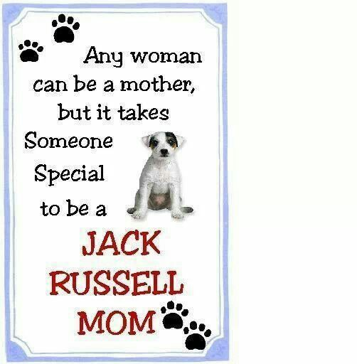 I'm a Jack Russell Mom