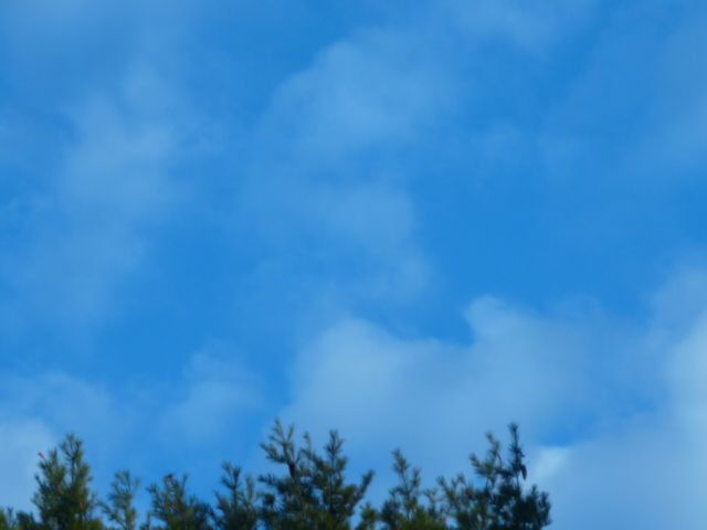 This is a cloud taken near my home. can you see the face. I was so surprised when a was able to capture it on film. I always look at the clouds to see what I can see. lol