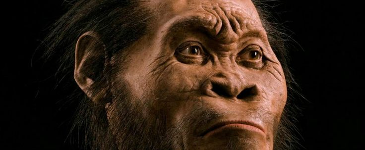 Here's everything you need to know about the newly discovered hominid species - ScienceAlert