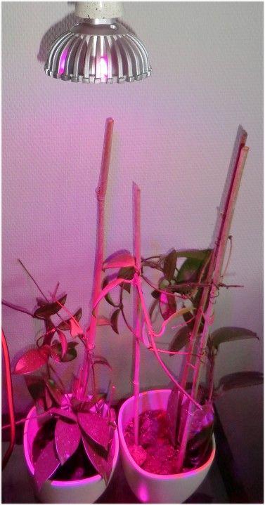7W led Plantelys Fordele - ingen varme udvikling - mindre el-regning - behøver ingen ventilation - hurtig opvækst til planterne - lang levetid