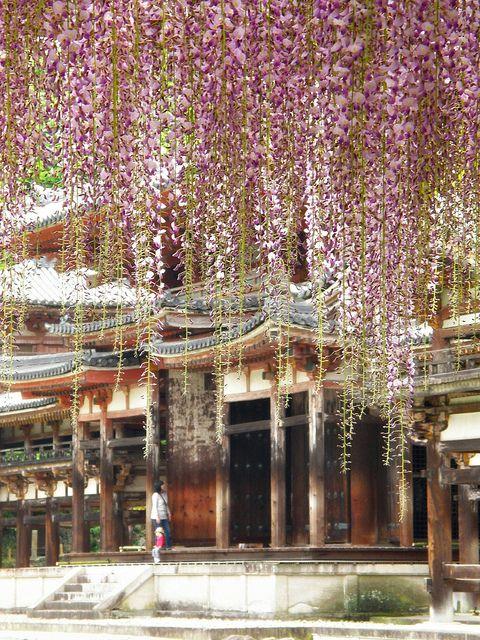 The Phoenix Hall, Kyoto, Japan.