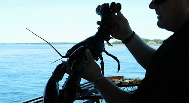 """Experience lobster fishing on PEI, recently ranked by Zagat as the second-best """"foodie getaway"""" in the world. San Diego Reader"""