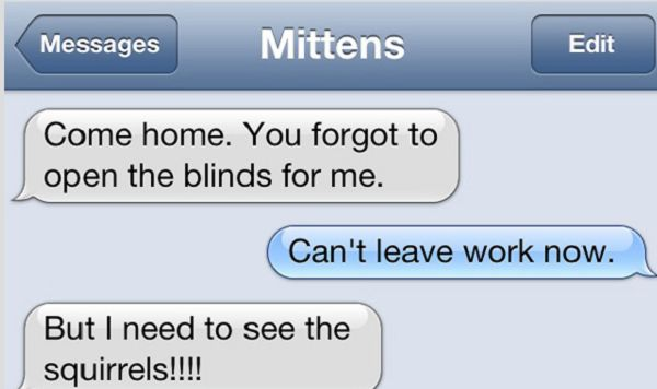If Your Cat Could Text This Is What He/She Might Say - NewsLinQ