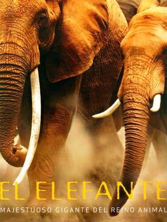 """#Animales #Parragon El Elefante - Gill Davies.  """"El Elefante"""" es un texto fascinante, con estupendas fotografías que exploran el mundo de los elefantes: la vida cotidiana, la estructura social de los clanes familiares, la crianza, la conducta de la manada, el liderazgo matriarcal y la solitaria vida del macho."""