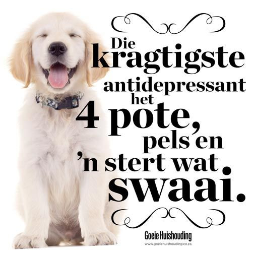 "Afrikaans | English: ""The most powerful antidepressant has 4 legs, fur, and a tail that swings."""
