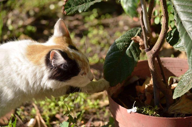 curious cat - curious cat