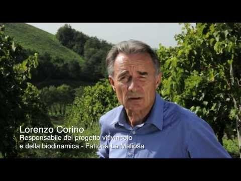 Intervista a Lorenzo Corino alla Fattoria La Maliosa - YouTube agricoltura biodinamica #organic