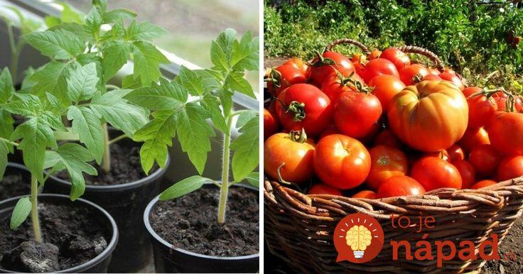 Úplne zadarmo si môžete úrodu paradajok zdvojnásobiť!
