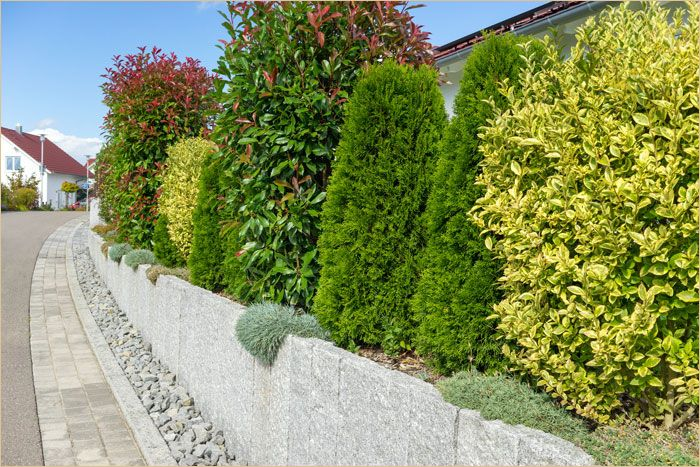 Garten Pflanzen Als Sichtschutz