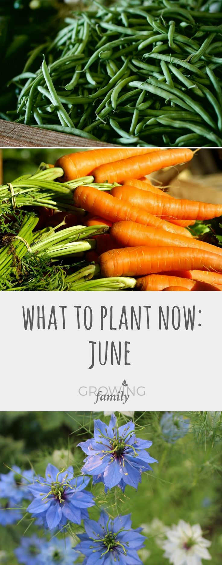Beautiful vegetable and flower gardens - Summer May Be Upon Us But There Are Still Plenty Of Vegetable Crops And Flowers