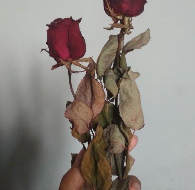 Paling Hits 30 Gambar Bunga Layu Bunga Mawar Kering Design Craft Craft Supplies Tools Download Bunga Layu Home Facebook Downlo Di 2020 Bunga Gambar Bunga Kering