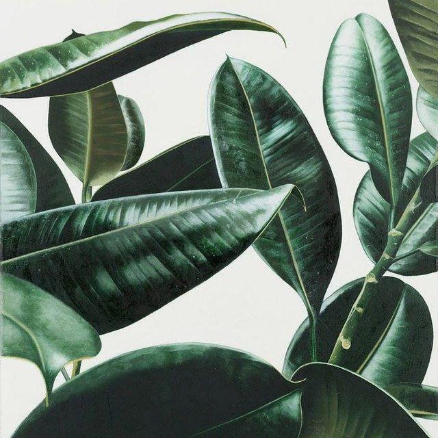 Plants 4 eva #afends