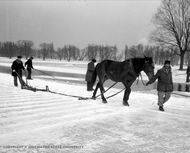 Ice Cutting on Belle Isle (Detroit ) for the ice industry  c. 1936