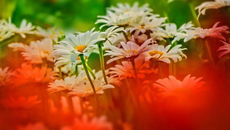 Aziz Nasuti Blog: Flower mask!