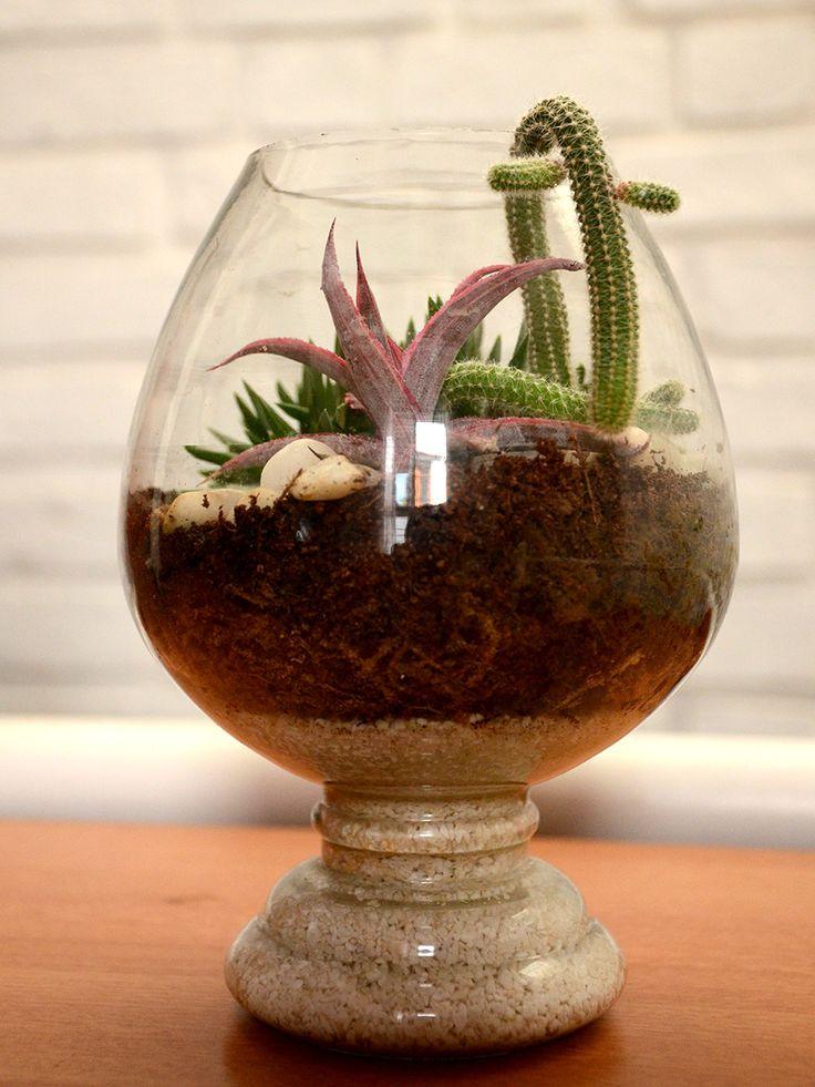 Buy Succulent Terrarium (Open Terrarium)