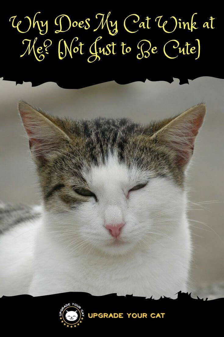 Why Does My Cat Wink At Me The Surprising Truth Cat Behavior Cute Kitten Pics Cats
