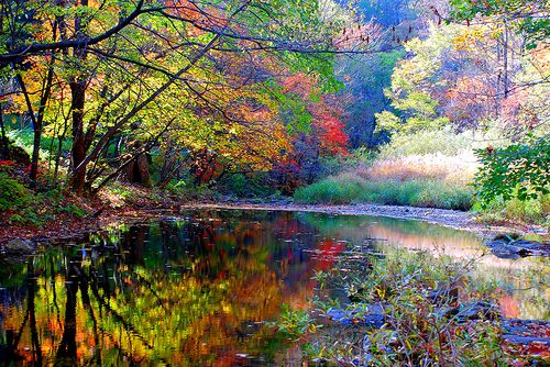 So beautiful: Colors Pallets, Favorite Places, Dreams Vacations, Natural Colors, Pretty Colors, Beautiful, Fall Autumn, Autumn Lakes, Autumn Trees
