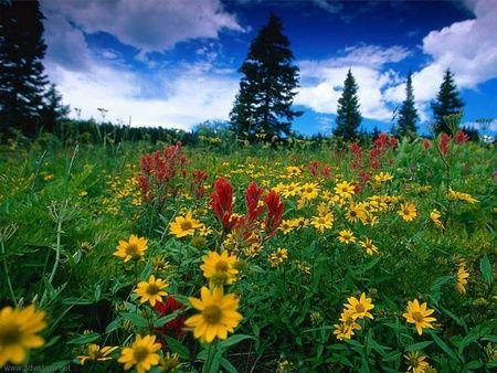 Great Pics Of Nature Beauty - Timepass Fun