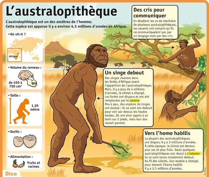 L'australopithèque