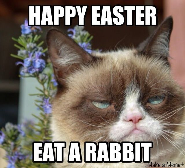 Happy Easter Grumpy Cat Pictures, Photos, and Images for Facebook ...