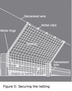 Figure 5: diagram showing securing the netting on cat-proof fencing