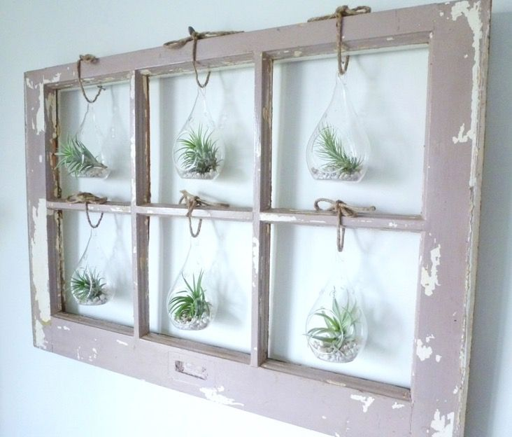 Antique window frame re-purposed to create a modern home accent. Its glass panes have been removed and replaced with charming terrariums, each with a different air plant. Whether you put it in ...