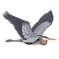 Image result for heron pattern