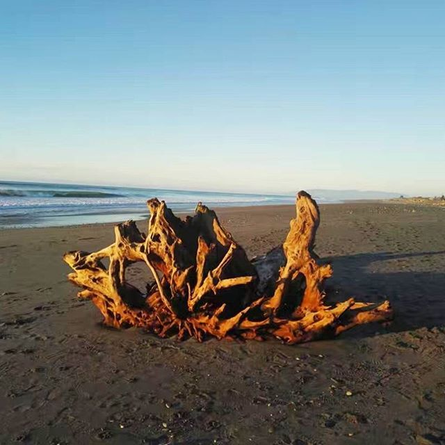Driftwood capital of NZ! Taken by our customer, Yubo