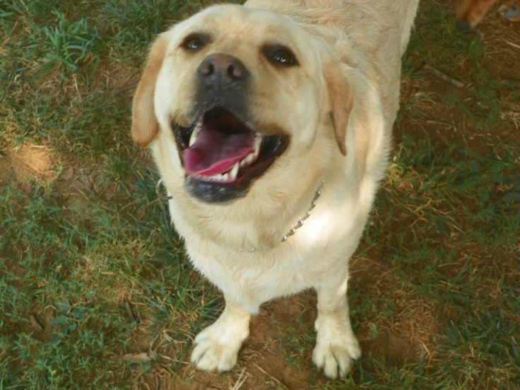 Alara has the best smile! Good smile, Puppies, Tv