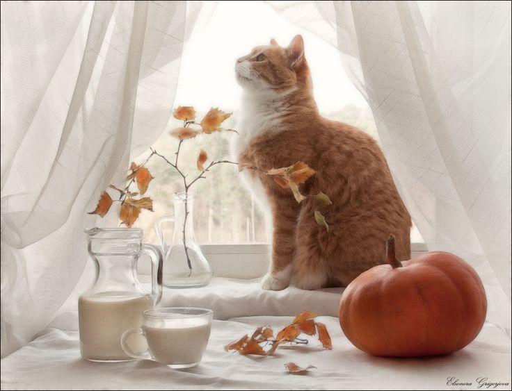 уязвимыми доброе утро картинки с котом осень вид