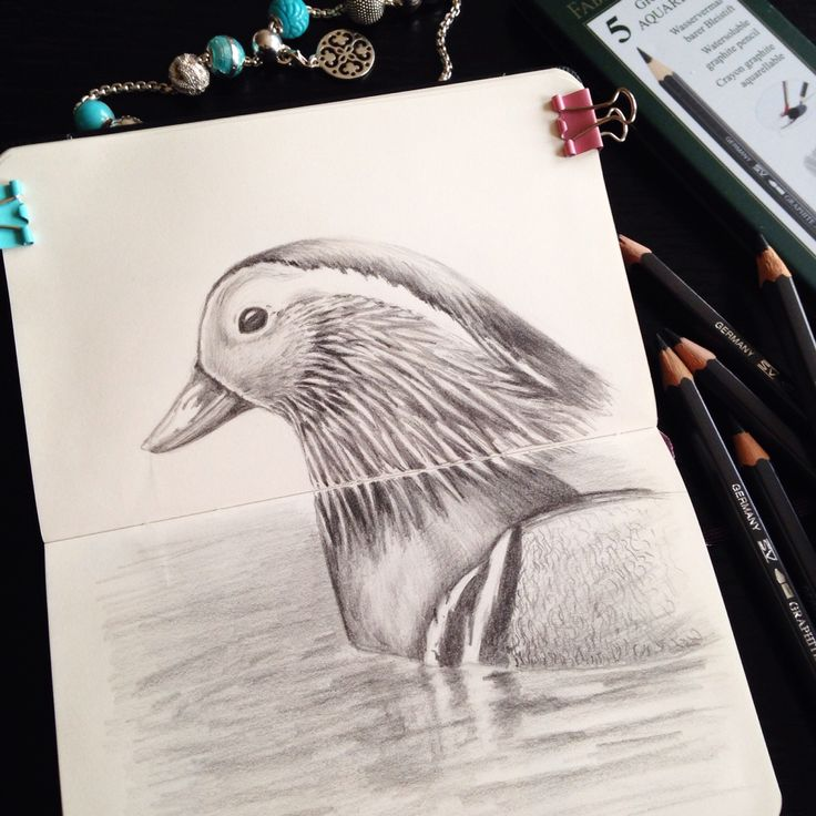 Mandarin duck drawing graphic pencil уточка мандаринка графика графитовый карандаш рисунок птица