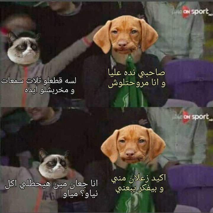 Pin By Nada Shubber On Jokes Funny Laugh Jokes
