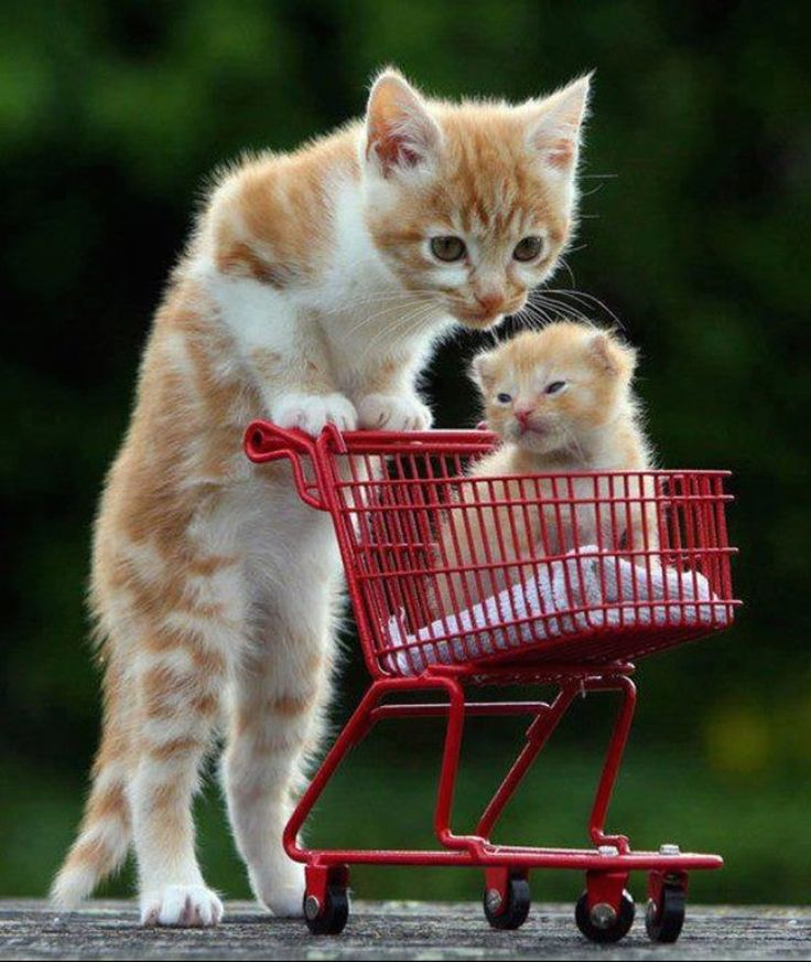 10 Baby Animals Who Know How to Grocery Shop — Can You Even Handle It