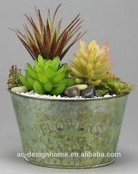 Resultado de imagen de small cactus plants arrangement