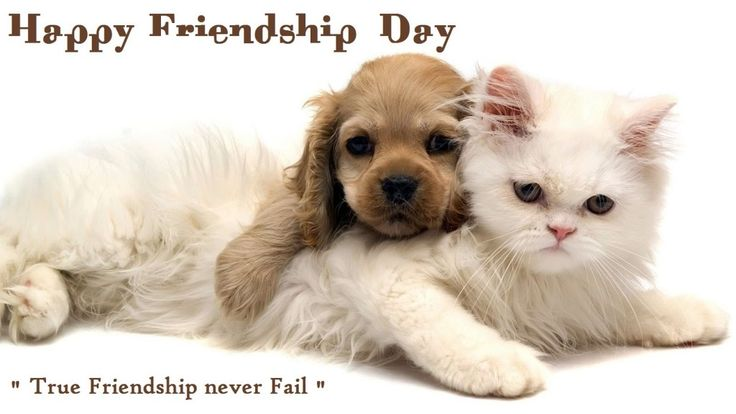 happy friendship day quotes in 2014