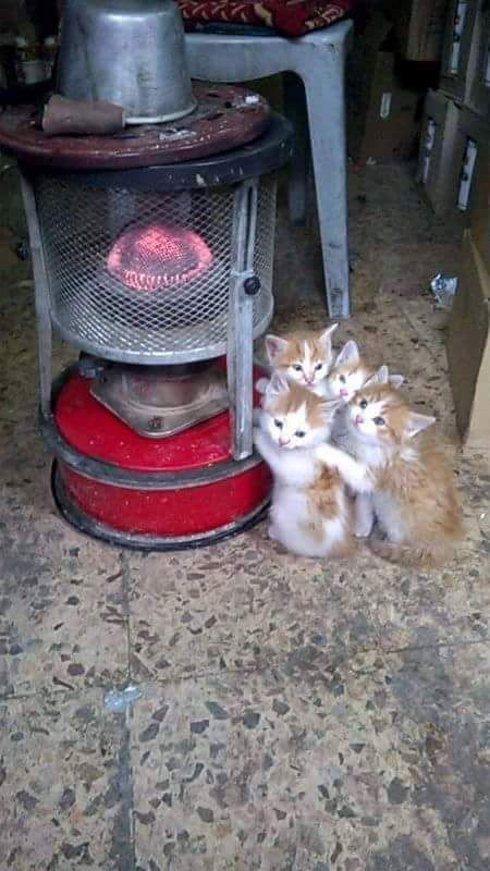 """* * """" God blessed us - weez found some warmth on dis foresaken farm. Noes body cares abouts de barn cats, yets we catch de meeses fer dem."""""""