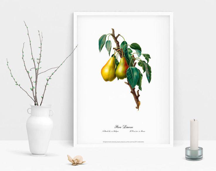 Pear Watercolour wall art Botanical poster vintage antique geclee art print  #Vintage