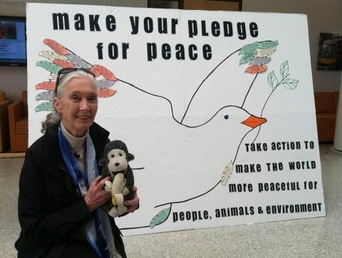 Jane Goodall - International Day of Peace