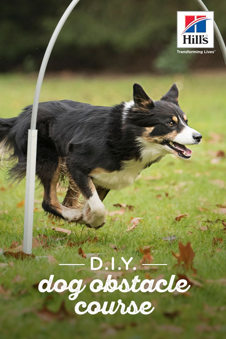 How To Make A Diy Dog Obstacle Course At Home Dogs Dog Training