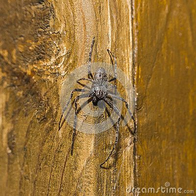 Spider in the night on wooden wall.