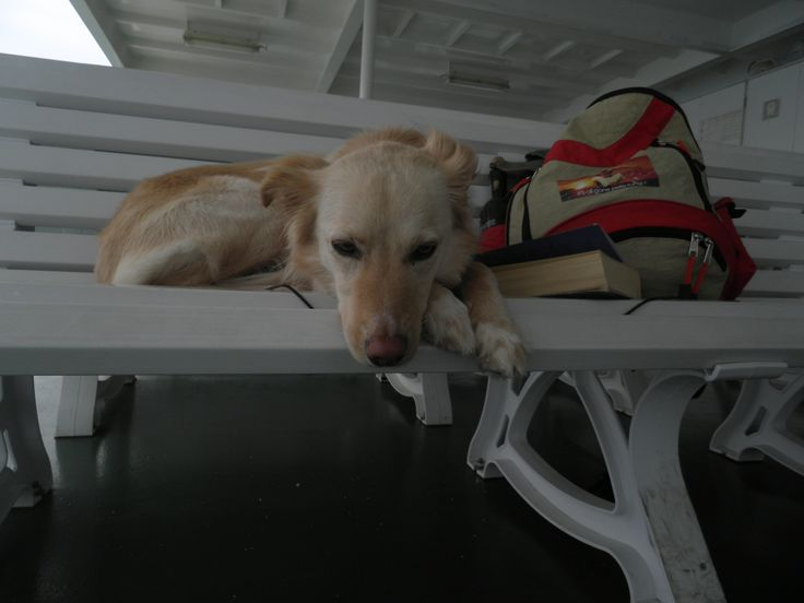 Billie Jean, the dog, loves to travel to Greek Islands!