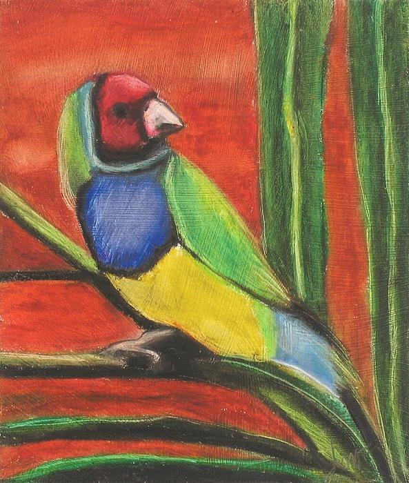 Gouldian Finch by Jeanne Fischer #wildbird #finch