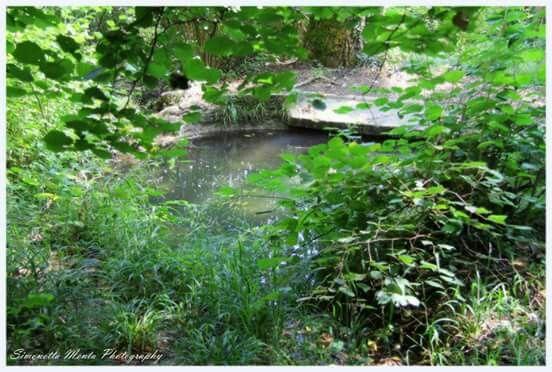 Ippovia e acque