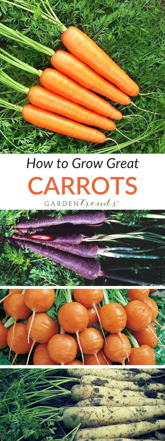 A stonefree sandy loam is best for carrots. Raised beds