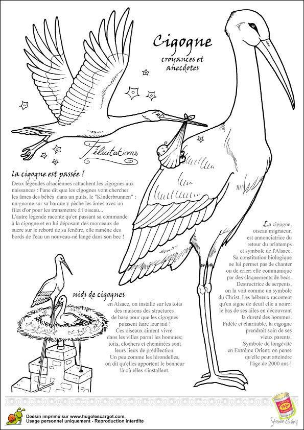 110 best images about coloriages d 39 oiseaux on pinterest bristol animales and portrait - Cigogne dessin ...