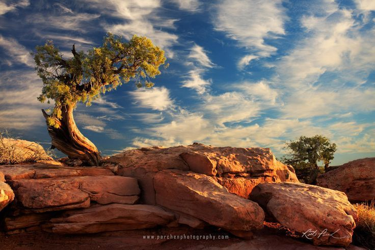 Photograph Juniper tree bathing in early light by Rick Parchen on 500px – #500px… – Parchen…